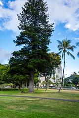 _DSC0720 (camlaque) Tags: 2018 hawai voyage