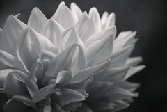 DSC_4539 (FMAG) Tags: 201809 dzialka kwiatki macro