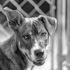 Brite02Sep201851-Edit.jpg (fredstrobel) Tags: dogs blackandwhite places atlanta usa pets animals ga pawsatanta phototype pawsdogs decatur georgia unitedstates us
