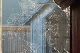 Spider webs