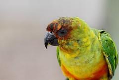 IMG_0027 (Alex Veness98) Tags: linconshirewildlifepark wildlife canon 7d canon7d
