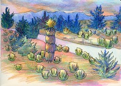 Learn to Draw the SoapTree Yucca & Broom Snakeweed (molossus, who says Life Imitates Doodles) Tags: coloredpencil funeasylandscapes illustration arttutorial yucca snakeweed