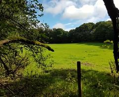 Bright morning (katy1279) Tags: newwalkwoodlandbrightmorningsunbluegreengreenfieldclouds