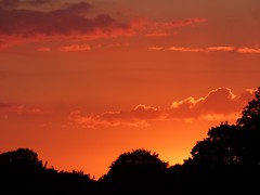 sunset july 18 (ghickey9087) Tags: sunset tree