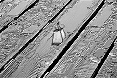 Hull Pier  Monochrome (brianarchie65) Tags: hullpier hull water pipes flowers wood river railings riverhumber thedeep tidalbarrier spider monochrome black blackandwhite blackandwhitephotos blackandwhitephoto blackandwhitephotography blackwhite123 blackwhiterealms yorkshireblackandwhite flickrunofficial flickr flickruk flickrcentral flickrinternational ukflickr unlimitedphotos ngc yorkshirecameraramblers