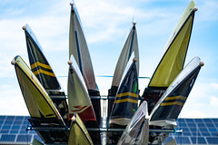 regatta-511 (madmtbmax) Tags: boats germany münchen sports munich rudern rowing masters senior sportler athlete outdoor sportphotography design details shape form fast smooth colourful bunt vivid abstract colors boot