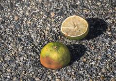 Left Behind (allentimothy1947) Tags: ma massachusette cut foundobjects lemon pavement httpstimothysallensmugmugcomnaturestreesidsnsmpma