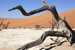 Deadvlei (Namibia) (www.holgersbilderwelt.de) Tags: namibnaukluftnationalpark deadvlei namibia nature beautiful light sky travel landscape tree color wildlife outdoor africa botany shadow amazing desert abandoned weather scenic lovely tranquility historic calm decay perspective safari nationalpark valley aperture dune