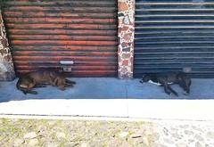 2018-09-06_1862615057087768263 (ky_olsen) Tags: teotihuacan streetpups