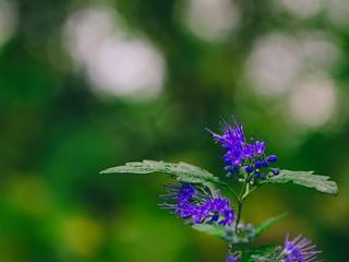 2018:09:12 17:31:04 - Flower Garden Bokeh - Tarbek - Schleswig-Holstein - Germany