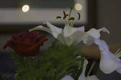 rose and lily (zawaski) Tags: zawaski©2018 alberta beauty canada naturallight noflash canmore ambientlight calgary rockymountains love canonef50mmf25macro