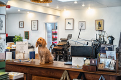 New Shop Assistant (jayneboo) Tags: shop assistant printing letterpress art design artcadia shrewsbury poopy dora cockapoo dog counter