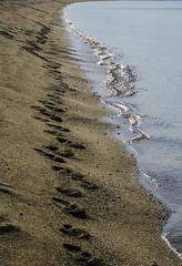 [ Bronzo - Bronze ] DSC_0495.R2.jinkoll (jinkoll) Tags: sea waves water sand beach shore calabria nicotera coast lines tracks prints reflections perspective direction