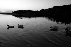 Du calme...nous navigouns (José J. Almuedo) Tags: bw x1 leicax1 leica 35mm blancoynegro noiretblanc yoga calma blackandwhite spain menorca island standingwater reflecting serenity water waterfront placid peaceful beach lakeside calm lake