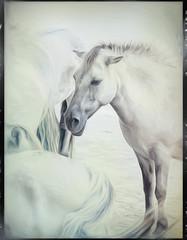 White horse (john_berg5) Tags: pferde horse with wild photoart hikey bavarian frans espain