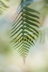 fern fronds, Vancouver. (gks18) Tags: doubleexposure canon lightroom nik fern nature green garden vancouver