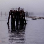 marine pilings in fog by Port Alberni thumbnail