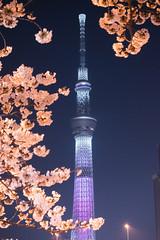 Tokyo Sky Tree & Sakura (inefekt69) Tags: japan tokyo sakura cherry blossoms flowers nature spring hanami nikon d5500 日本 東京 さくら 桜 花見 tokyoskytree sky tree night tower sumida 墨田