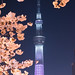 Tokyo Sky Tree & Sakura