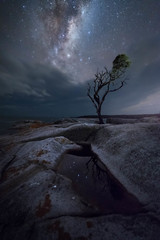 Stand Watch (Christopher Smith Creative) Tags: night tree lonetree stars reflections rocks milkyway tasmania bayoffires lichen astro