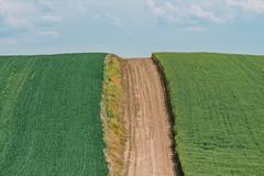 Up (Pedalhead'71) Tags: desert dirtroad drive easternwashington gravel landscape palouse prairie road rural washington whitmancounty wheat