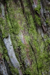 reference_52 (TLCStudentReferences) Tags: helenastackhouse plants lichen concrete ruins moss leaves fungi newzealand nz rocks tree texture rust