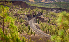 Winding Road (JamboEastbourne) Tags: teide tenerife lava road trees green