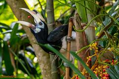 D850-3225 (yowstanley) Tags: nikon nature tree bird d850 200500mm garden
