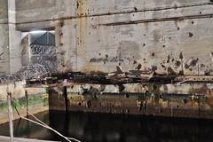 Base sous marine de La Pallice, La Rochelle (thierry llansades) Tags: bsm lapallice larochelle 17 aunis atlantic atlantique atlantikwall atlanticwall army armée aerosol blockhaus bloc block bunker blockhouse bauwerk bauwerke batterie battlefield bombing blauckhaus bauwerque blockaus blockouse bordeaux charentemaritime murdelatlantique