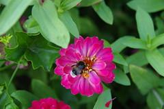 JLF19858 (jlfaurie) Tags: jardin hôteldeville evéché bourges jlfr mechas mpmdf lucila 21082018 flores garden flowers