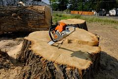 treesurgeon02 (Chuckcars) Tags: colorado montrose sunsetmesa tree surgeon cutting chain saw clearing trucking specialists sawing big workmen usa