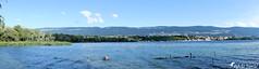 Réserve naturelle du bout du lac (Jean-Daniel David) Tags: panorama réservenaturelle lac lacdeneuchâtel yverdonlesbains ciel cielbleu nature nuage montagne jura bleu eau vert verdure roseau ville grandson arbre oiseau oiseaudeau