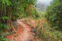 El sendero de los Alisios (Zu Sanchez) Tags: canarias grancanaria islascanarias sendero camino pathway path green forest deepforest selva jungle zusanchezphotography zusanchez