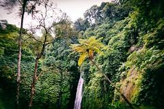Bali, Cascade a Munduk (Calinore) Tags: indonesia indonésie munduk cascade waterfall landscape nature bali mountain water fall