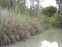 DSCN9967 (Gianluigi Roda / Photographer) Tags: autumn 2012 creeks streams lavinocreek autumncolors countryside pianura november