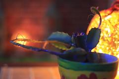 Boho Decor Cactus (blackunigryphon) Tags: cactus decor boho bohochic bohostyle bohodecor bohemian plant balcony balconydecor evening lantern lanterns ambient