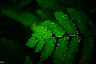 Acadia National Park Post #18: Plants