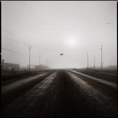 foggy intersection (e l e c t r o l i t e) Tags: hasselblad film ilford400 60mm electrolite shannonrichardson