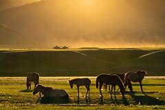 More golden light and dust (NettyA) Tags: asia kharkhorin mongolia orkhonrivervalley evening golden horses landscape light sun sunburst sunrays sunlight dust 6