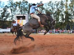 Darlan Kulmann (Eduardo Amorim) Tags: gaúcho gaúchos gaucho gauchos cavalos caballos horses chevaux cavalli pferde caballo horse cheval cavallo pferd pampa campanha fronteira quaraí riograndedosul brésil brasil sudamérica südamerika suramérica américadosul southamerica amériquedusud americameridionale américadelsur americadelsud cavalo 馬 حصان 马 лошадь ঘোড়া 말 סוס ม้า häst hest hevonen άλογο brazil eduardoamorim gineteada jineteada
