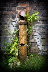 flower pipe (phil child.photos) Tags: ferns wild flowers pipe growing telford