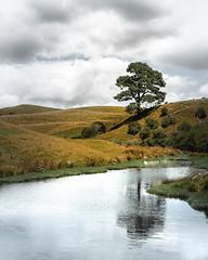 Quiet place (Hanna Tor) Tags: landscape nature travel newzealand hannator tree lake sky clouds