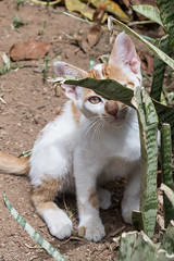 2018/07/11 12h45 chat du jardin andalou, Kasbah des Oudayas (Rabat) (Valéry Hugotte) Tags: 24105 kasbah kasbahdesoudayas kat maroc oudayas rabat canon canon5d canon5dmarkiv cat chat chaton gatos kitten rabatsalékénitra ma