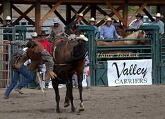 0X0A9752 (Elaine Taschuk) Tags: nicolavalleyrodeo nicolavalley rodeo cowboy horse bull bronco wrestling equine merritt cowgirl bareback steer steerwrestling saddlebronc tiedownroping ladiesbarrelracing barrelracing barrel teamroping bullriding rider cpra prorodeo