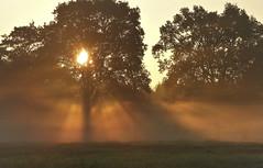 Sunrise through the mist (joeke pieters) Tags: 1430033 panasonicdmcfz150 zonsopkomst sunrise sunrays mist woold winterswijk achterhoek gelderland nederland netherlands holland landschap landscape landschaft paysage ngc npc