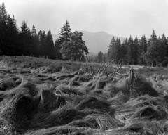 Lindbergschachten (str.ainer) Tags: nationalpark bayerischerwald bavarianforest schachten rachel meadow linhof kardansupercolor schneider symmars ilford fp4 moersch ecofilmdeveloper gimp hugin symmars150mmf56