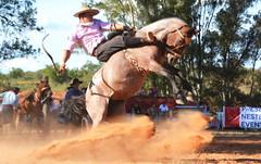 Maxom Soares (Eduardo Amorim) Tags: gaúcho gaúchos gaucho gauchos cavalos caballos horses chevaux cavalli pferde caballo horse cheval cavallo pferd pampa campanha fronteira quaraí riograndedosul brésil brasil sudamérica südamerika suramérica américadosul southamerica amériquedusud americameridionale américadelsur americadelsud cavalo 馬 حصان 马 лошадь ঘোড়া 말 סוס ม้า häst hest hevonen άλογο brazil eduardoamorim gineteada jineteada