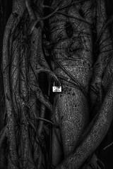 A vie (gillesgilles2) Tags: blackwhitepassionaward cadenas arbre