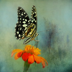 Summer Delight (ulli_p) Tags: asia art artofimages aworkofart amazingcolours butterflys blossoms colours canoneoskissx5 colorful flowers flickraward light likeapainting macro nature thailand texture textured texturedphoto