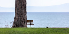 Momentous (A Different Perspective) Tags: california southlaketahoe usa bench grass green rock seat tree water wood